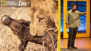 Watch Wild Predators Battle for Survival  Beyond 'Savage Kingdom' (Part 3) | Nat Geo Live