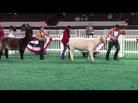 Beef Show, Freedom Hall West - November 13, 2016