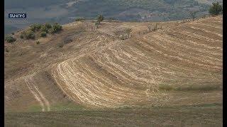 Ոսկևանում ցորենը չեն հնձել ադրբեջանական կրակոցների պատճառով