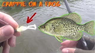 Froggy vs. Crappie | Moonshine Crappie Jigs