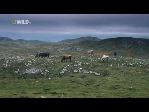Nat Geo Wild - Balkan Temperate Rainforests - Animal Wildlife Documentary