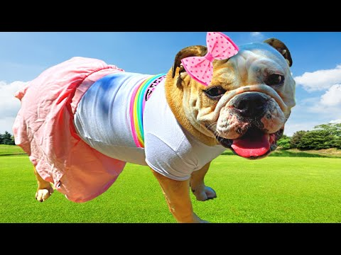 CUTE BULLDOG PLAYS DRESS UP with Dog Costumes! Funny Dog Reacts