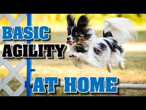 Teach Basic Agility To Your Dog At Home