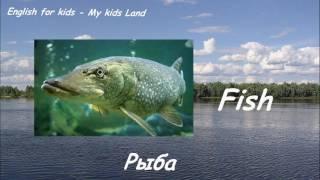 Речные пресноводные рыбы. Часть 1. Английский для детей.