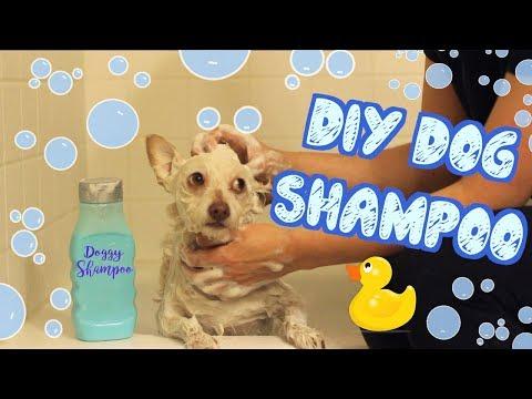 DIY Dog Shampoo | Pet DIYs