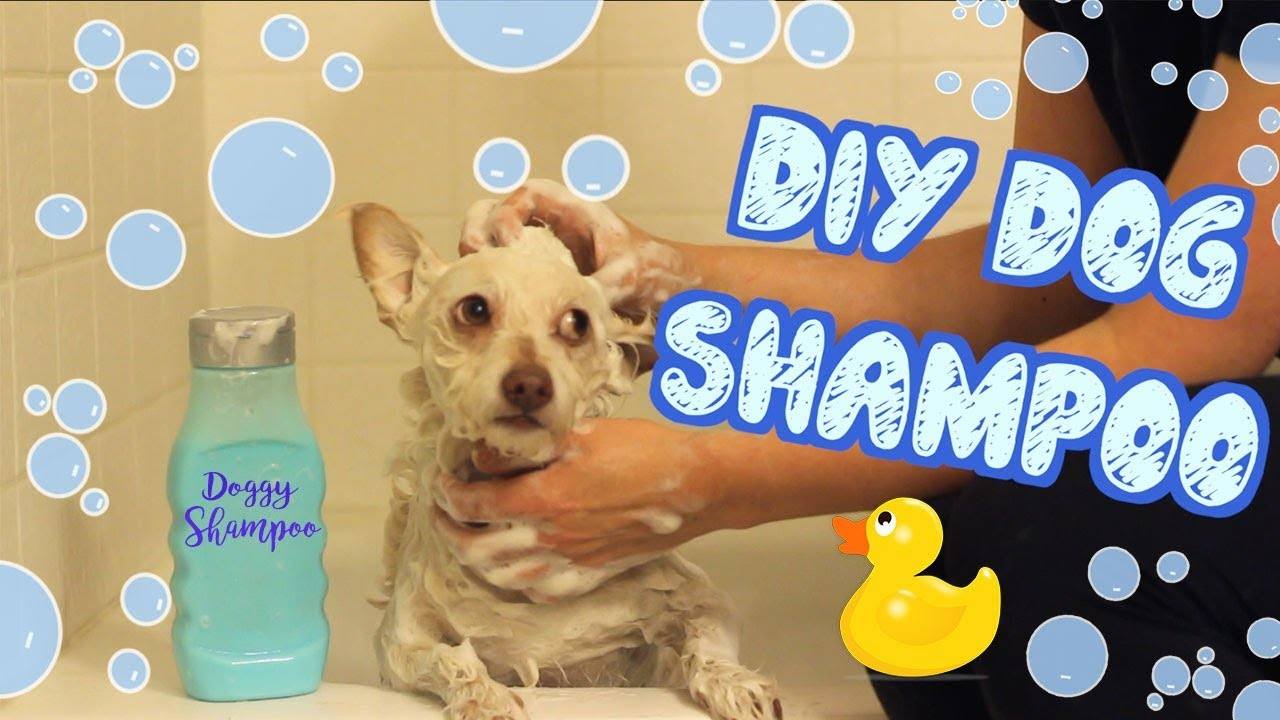 DIY Dog Shampoo | Pet DIYs - YouTube
