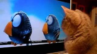 Like a kitten watching a cartoon :)