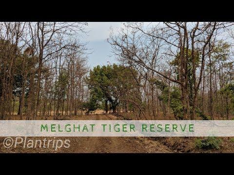 Melghat Tiger Reserve 4K