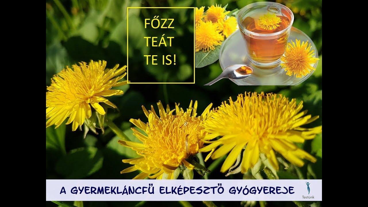 pitypang tea fogyás előnyei sárga golyós zsírégetők
