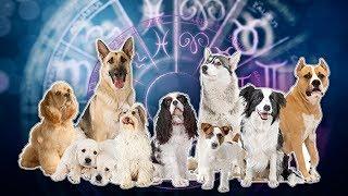 сОБАЧИЙ ГОРОСКОП  Кто ваша собака по знаку зодиака?