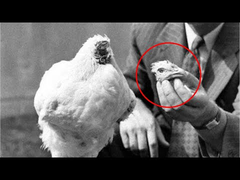 What Happened To Mike The Headless Chicken?