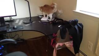 Как отучить кота лазить по столу