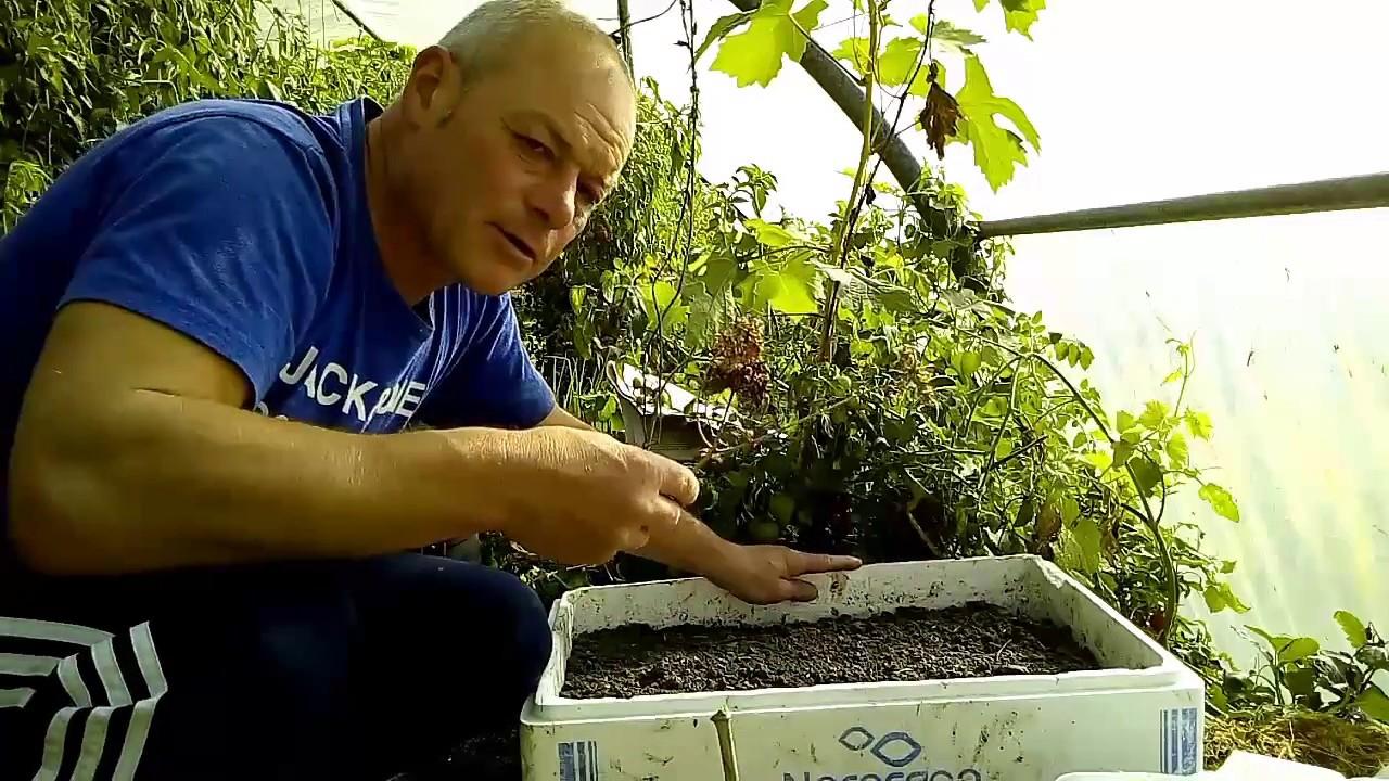 Que faire au jardin en septembre comment semer le c leri - Comment cuisiner le celeri en branche ...