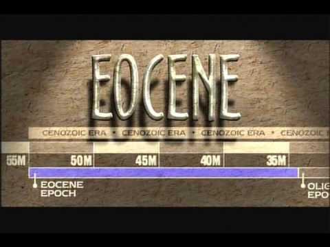 Eocene Epoch - Florida Fossils: Evolution of Life and Land