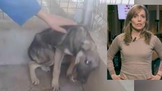 Nach Jahren der Misshandlung: Hund erfährt zum ersten Mal Streicheleinheiten