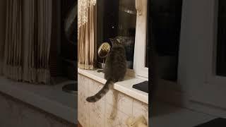 Моя кошка вот так смотрит в окно