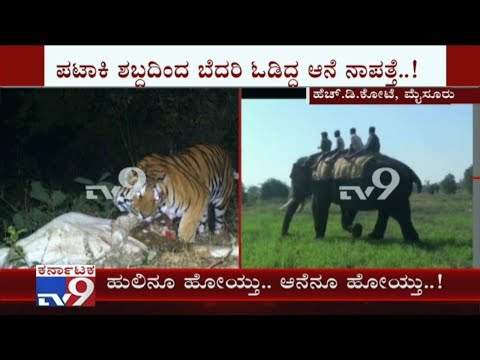 Elephant Which Was Brought To Capture Tiger Fled to Forest After Hearing Fireworks Sound In HD Kote