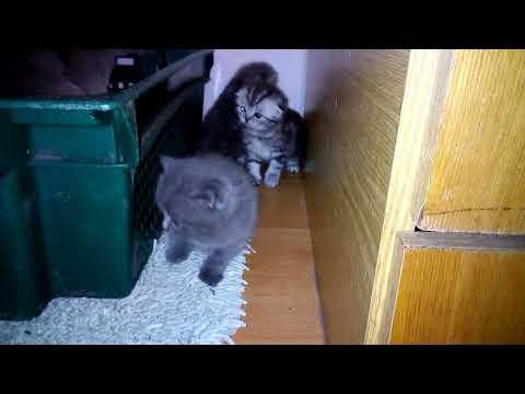 Котята первый раз гуляют сами