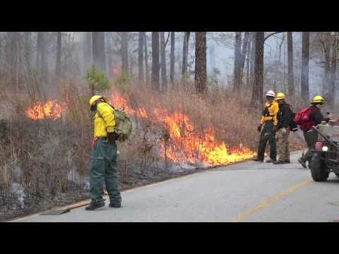 Prescribed Fire in Georgia