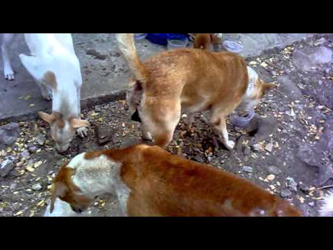 Me Feeding Stray Puppies On 20th April 2016  At About 3 Pm