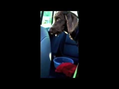Dog vomits from YouTube · Duration:  54 seconds