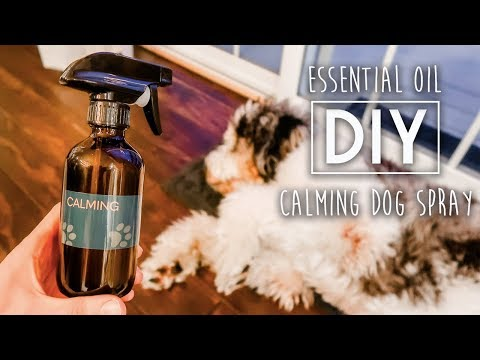 diy-essential-oil-calming-dog-spray-for-anxiety