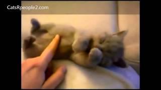 Лучшая подборка испуганных котов!