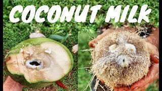 HOW TO MAKE FRESH COCONUT MILK | 100% from Nut to Milk!
