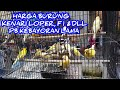 Harga Burung Kenari Loper F Dll Pb Kebayoran Lama  Mp3 - Mp4 Download