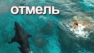 ОТМЕЛЬ в 720 HD | Нападение Акулы на девушку!