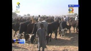 Visite du Ministre de l'élevage au marché de bétail de Diguel