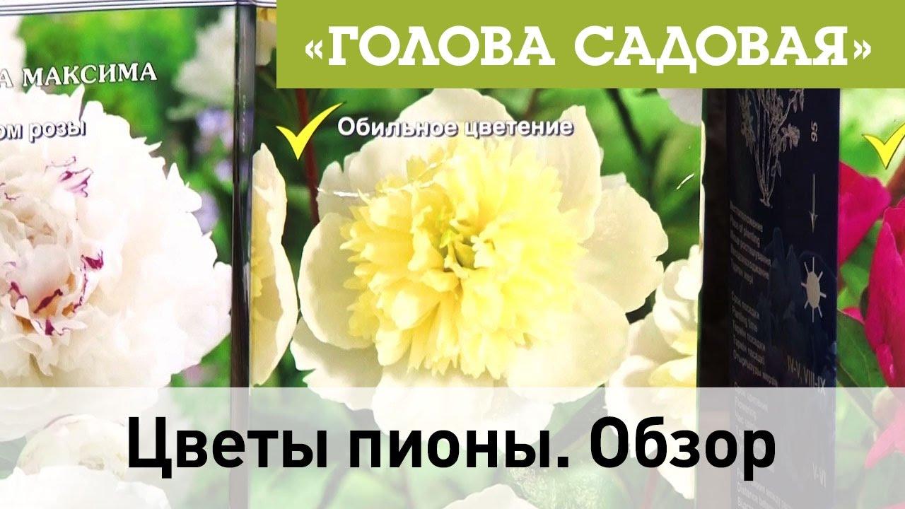 Пион древовидный из фоамирана ярмарка мастеров ручная работа, handmade. Купить лизиантус с бутонами на зажиме заколка для волос, лизиантус, цветы ручной работы, цветы в украшении. See more. Купить брошь