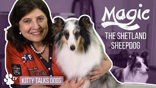 Grooming Magic the Shetland Sheepdog | Kitty Talks Dogs  TRANSGROOM