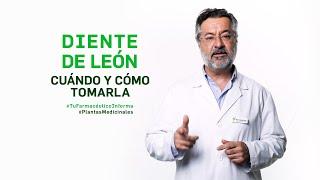 Diente de león, cuándo y cómo tomar esta planta medicinal - #TuFarmacéuticoInforma