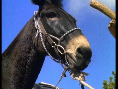 Mules Rides Grand Canyon History