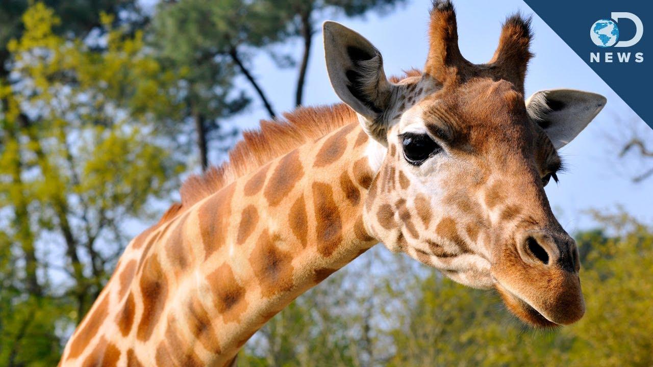 Why Do Zoos Kill Healthy Animals?