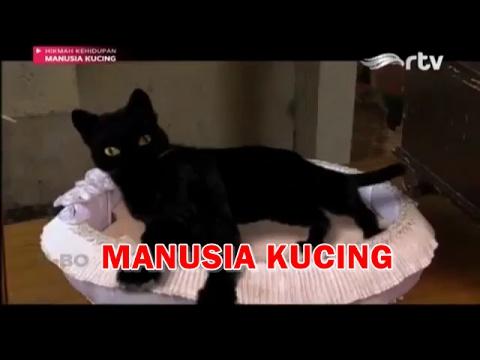 Hikmah Kehidupan - Manusia Kucing