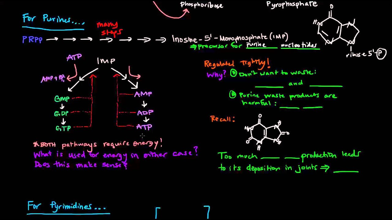 Purine and Pyrimidine Nucleotide Biosynthesis