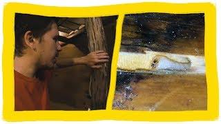 видео Как избавиться от жука короеда в деревянном доме?