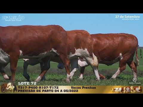 LOTE 072