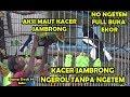 Kontes Kacer Ngerol Panjang Aksi Tarung Maut Kacer Jambrong Usai Mabung Eps  Mlk Om Tj Toto  Mp3 - Mp4 Download