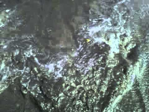 freshwater spring entering the ocean