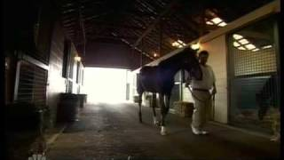 Biography of the magnificent Barbaro.