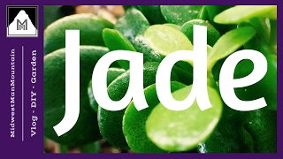 SIMPLE Jade Pruning, Propagating, and Protecting Tips
