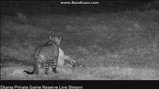 polowanie Afryka 2018