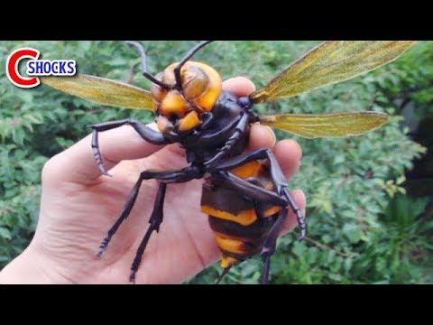 ガチ危険…スズメバチに刺された時の応急処置!駆除退治は!?