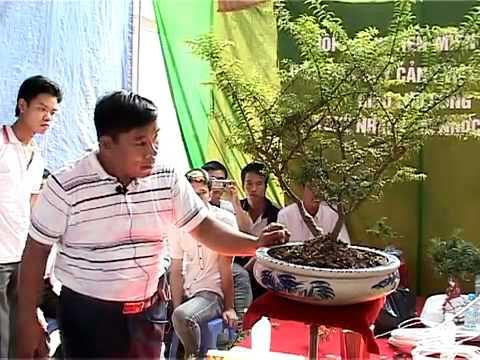 Nghệ nhân LNVinh hướng dẫn kỹ thuật tạo hình Bonsai- P6/16- www.huongsacdatviet.com - alomua.vn