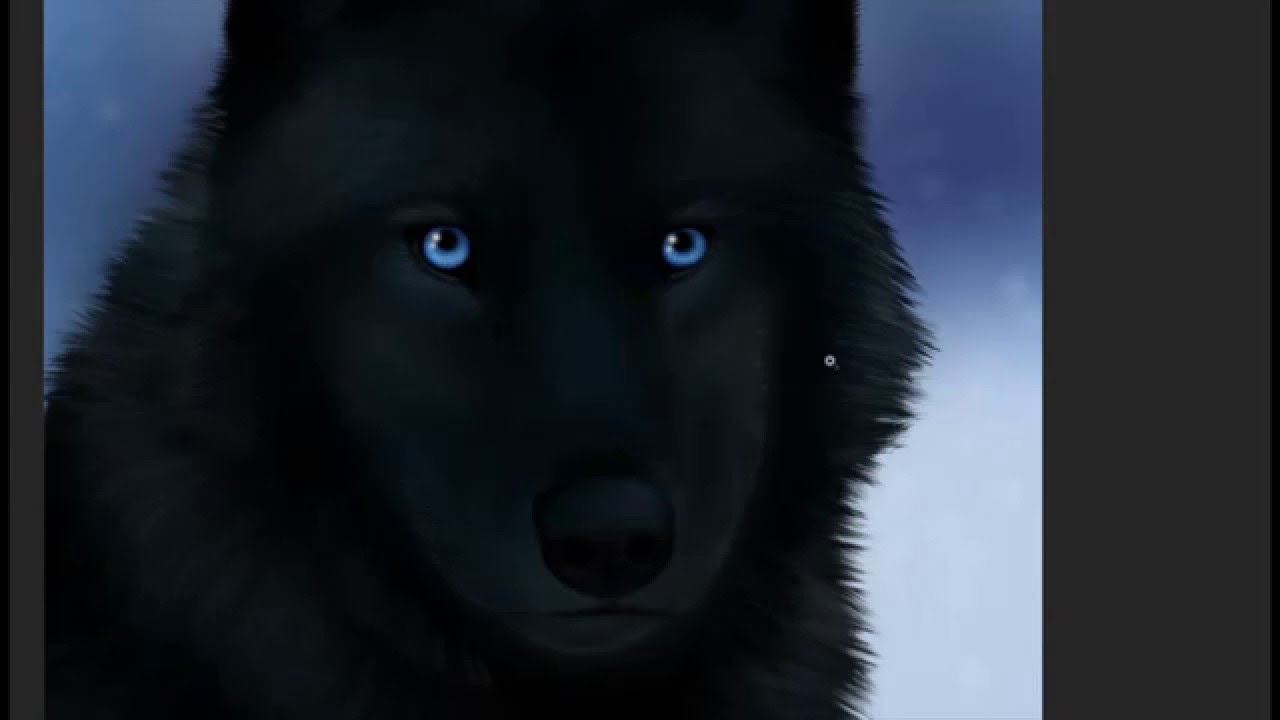 black wolves with blue eyes - photo #12