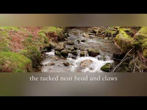 Seamus Heaney Reading St. Kevin and the Blackbird - HD 1080p