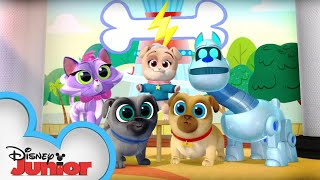 Picture Pups 📷 | Puppy Dog Pals Puppy Playcare | Disney Junior